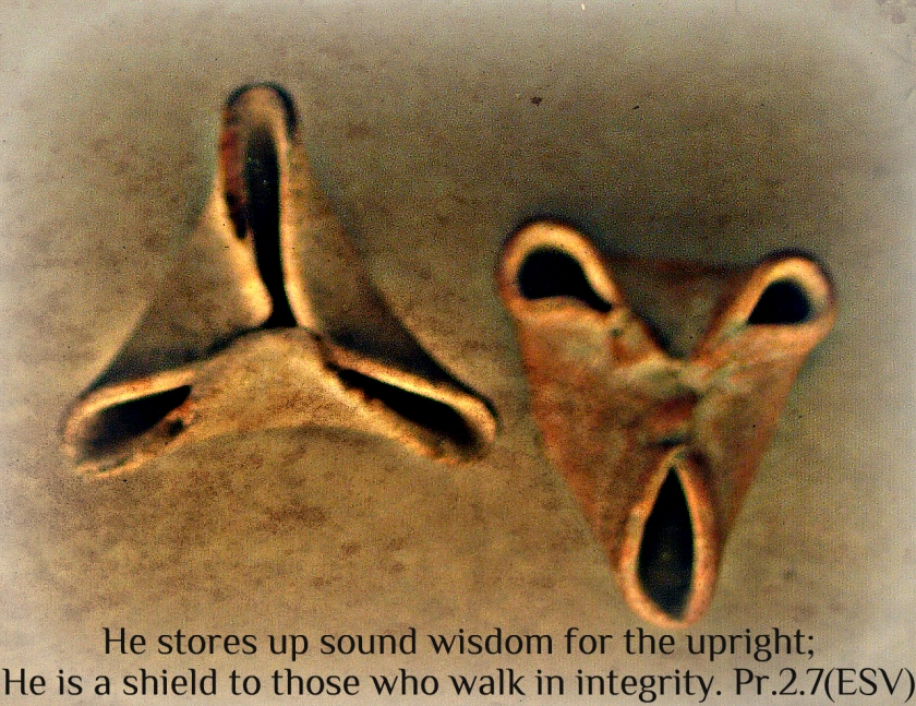 9th Century B.C. African Oil Lamps