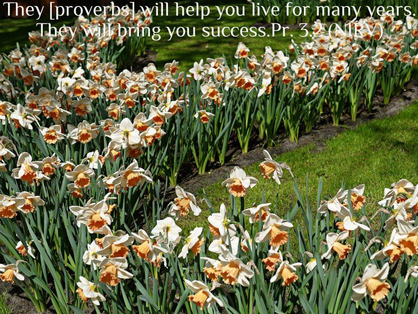 Proverbs 3.2